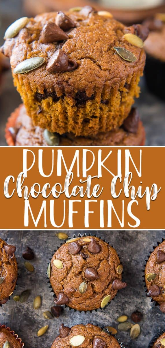 Fluffy and packed with flavor, these Pumpkin Chocolate Chip Muffins are about to become your new favorite fall treat! These super moist buttermilk pumpkin muffins are chock full of chocolate and crowned with toasted pumpkin seeds for a lovely crunch.