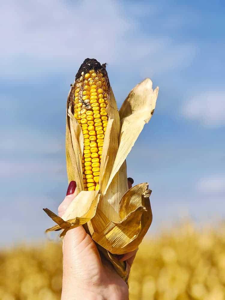 A Whirlwind Farm Food Tour In Kansas